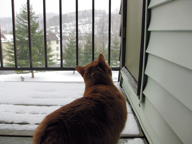 Loki looking out at the snow from our apartment balcony.